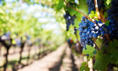 Wine tours in Paphos